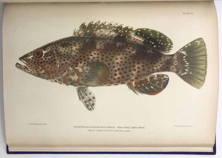 Investigations of the Aquatic Resources and Fisheries of Porto Rico by the United States Fish Commission Steamer Fish Hawk in 1899. Barton Warren. U. S. Commission of Fish and Fisheries Evermann.