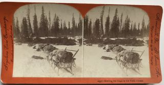 [Collection of Thirty-three Stereoviews Depicting Scenes from the Alaska Gold Rush]