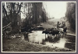 Photograph Album of Handsome Images Depicting Local Scenery Around Chile, Taken by Herbert Telge...